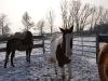 Winterbilder Januar 2010